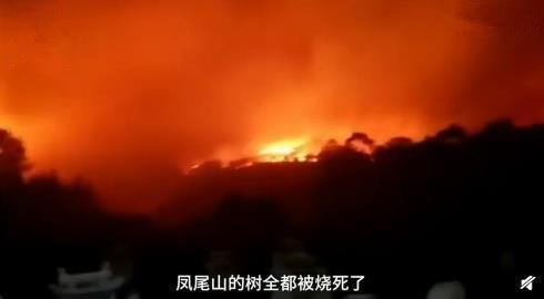 云南个旧市凤尾山发生森林火灾1
